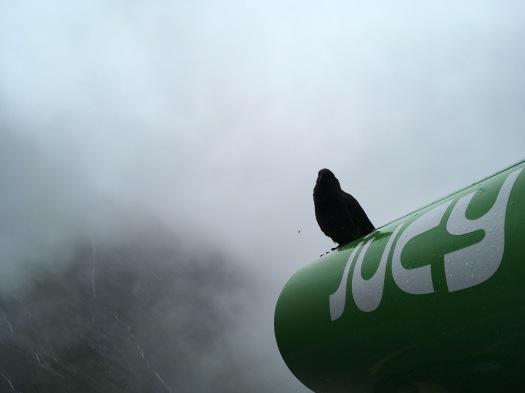 Bird on Jucy van